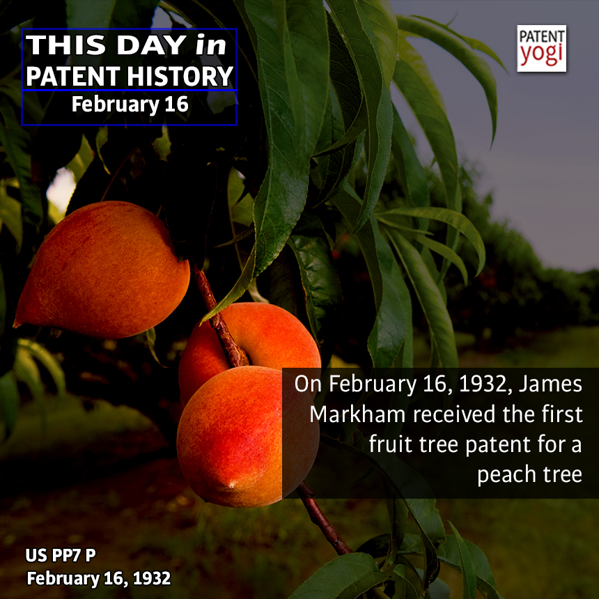 On February 16, 1932, James Markham received the first fruit tree patent for a peach tree