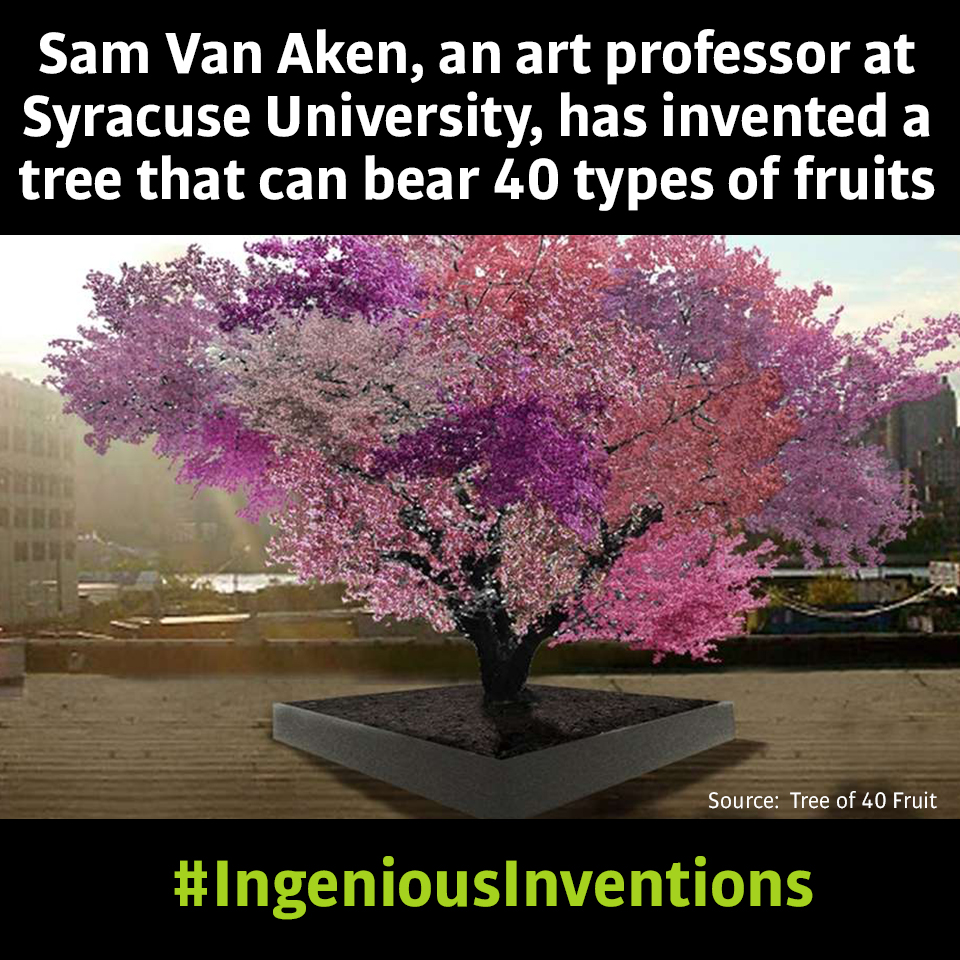 PatentYogi_Even trees can be invented