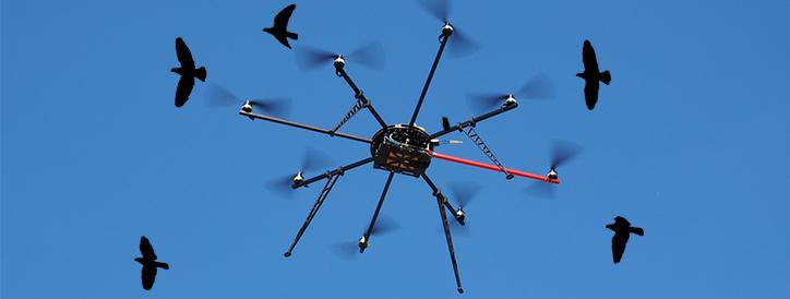 Utility Companies Will Now Address Bird Safety Concerns